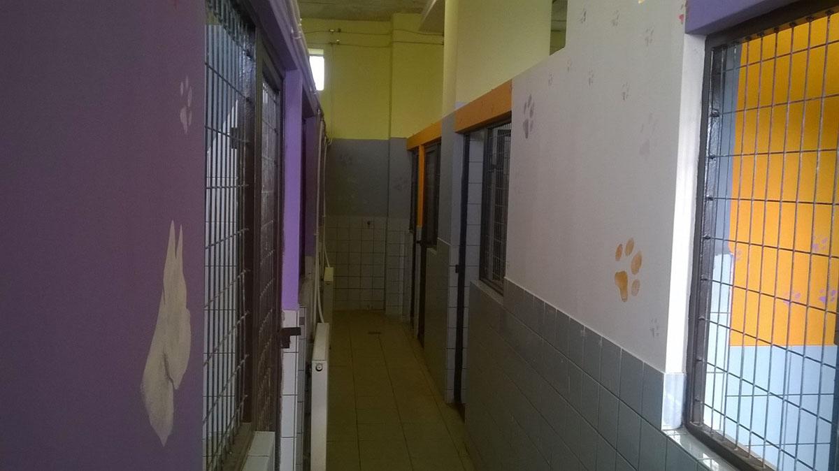 kutyabazis kutya panzió 2