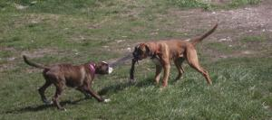 kutyabazis haznal kutyaovi